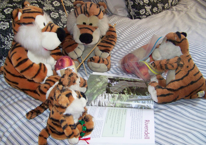 Photo of stuffed tigers trying to figure out a sock pattern book